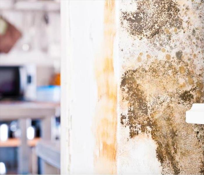 Mold Remediation Mold Damage can Develop Anywhere Inside Your Miami Home