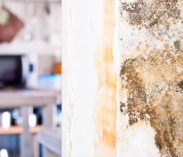 Mold Remediation How SERVPRO Handles Mold Damage On Your Coconut Grove Kitchen Wall
