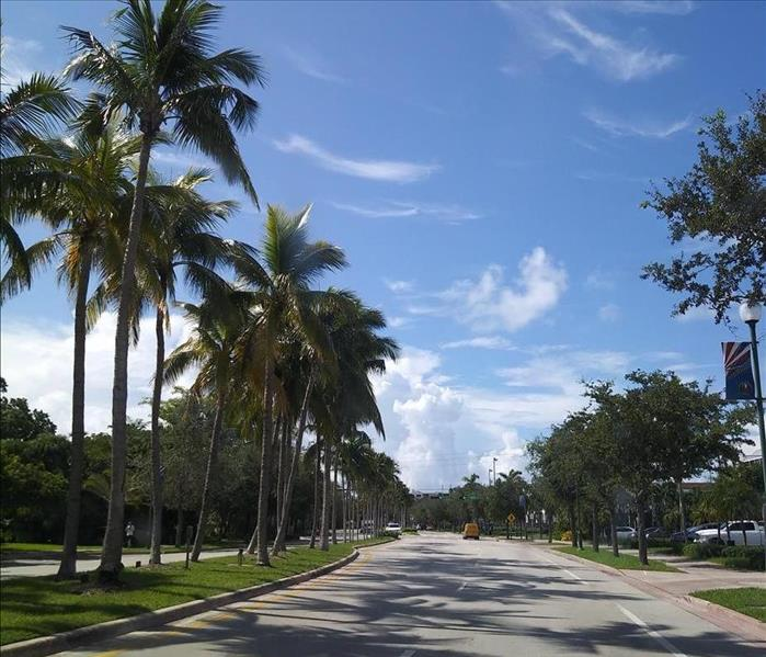 palm tree lined boulevard in Miami with a blue sky