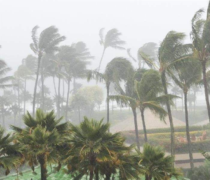 Palm trees blowing and bending in hurricane